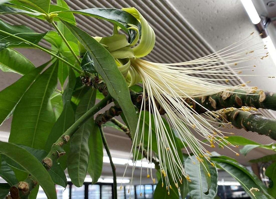 串本町在住の楠原美穂さんをご紹介します。